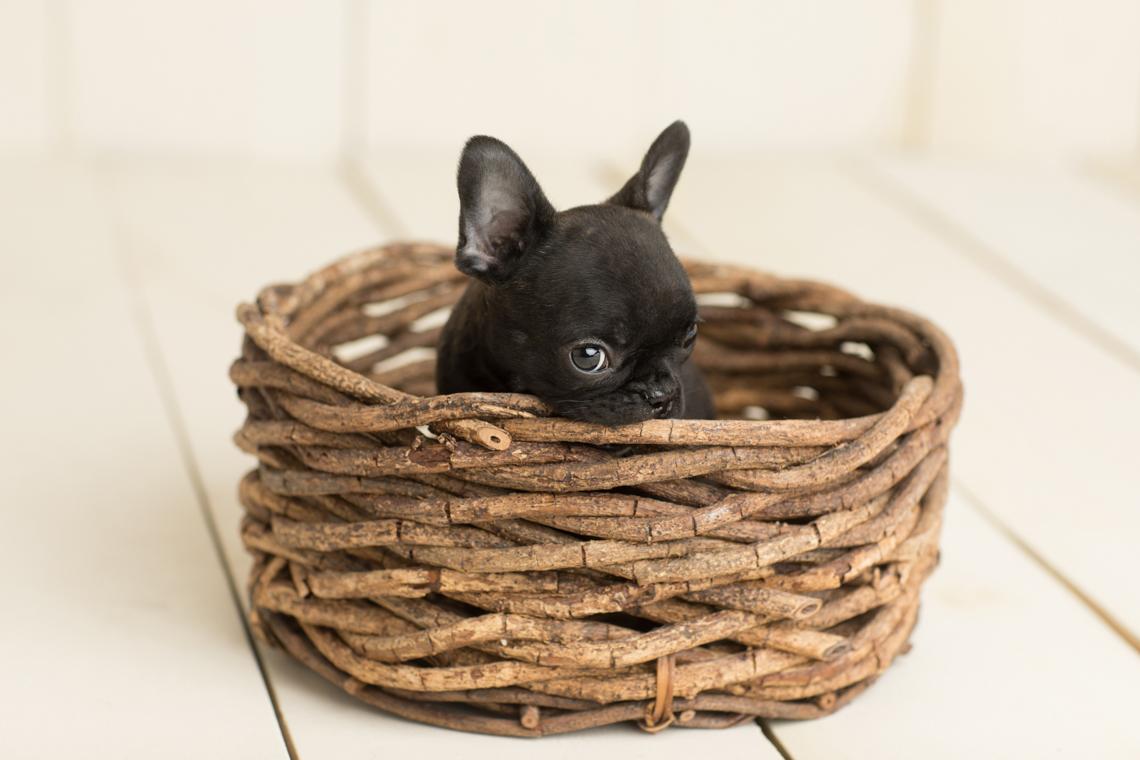 Dog Puppy Photography by Studio Life of Edinburgh