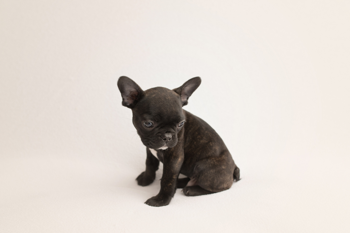 Dog Puppy Photography by Studio Life of Edinburgh